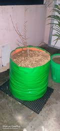 HDPE HUGE Round Grow Bag - 24x24 Inches (2x2 Ft) - 220 GSM
