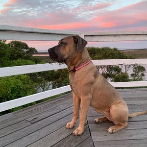 Rope Dog Collar Dusky Pink | Twisted 2.0