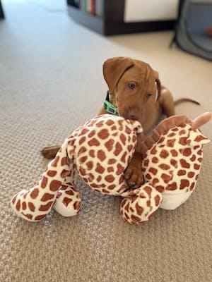 Gerry Giraffe Soft Dog Toy | Rosewood