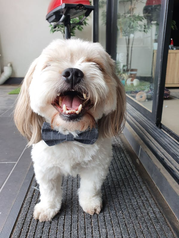 Dog Bow Tie Grey | Dapper