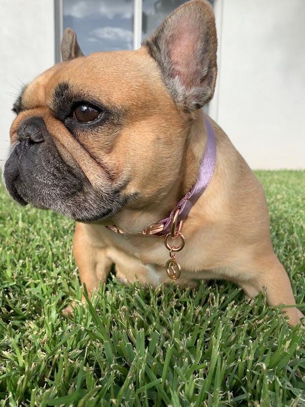 Dog Collar Lilac Purple | Glamorous
