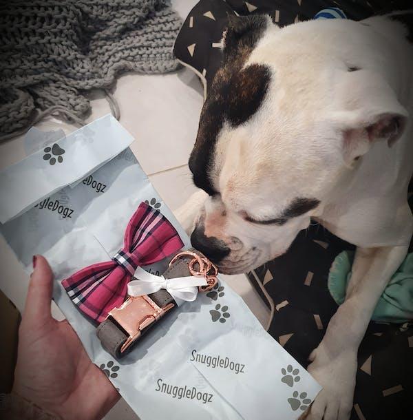 Dog Collar Velvet Grey | Timeless
