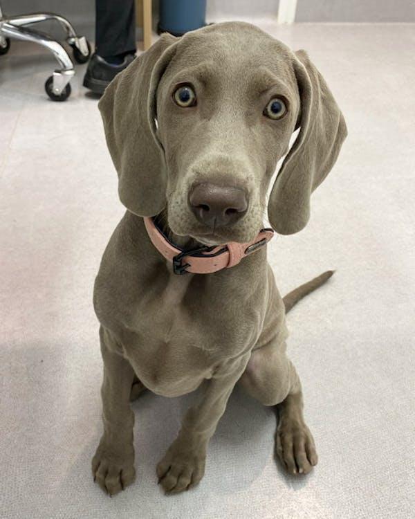 Dog Collar Blush Pink | Loyal