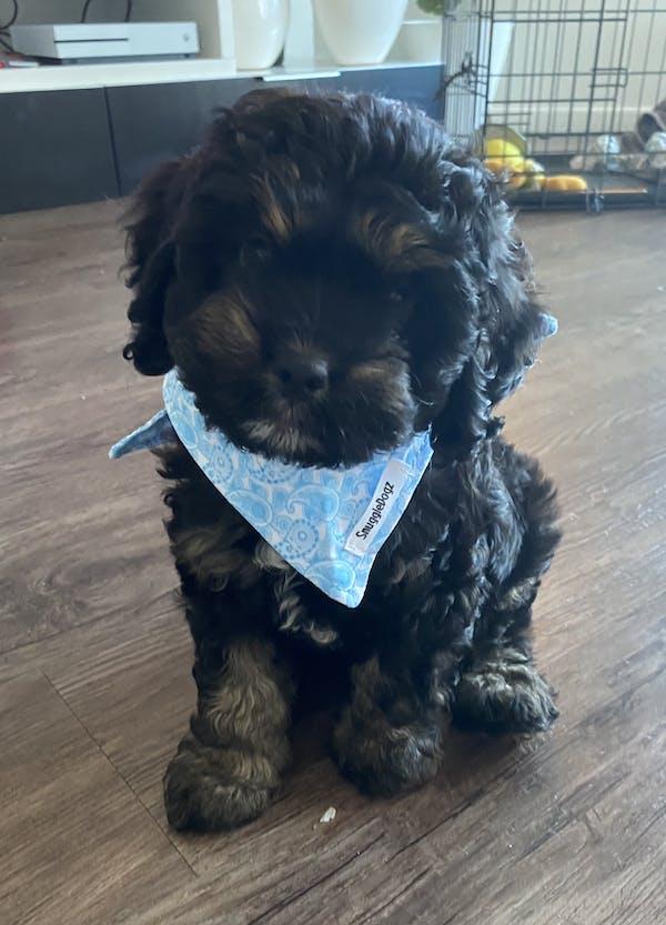 Dog Bandana Blue Paisley | Refined