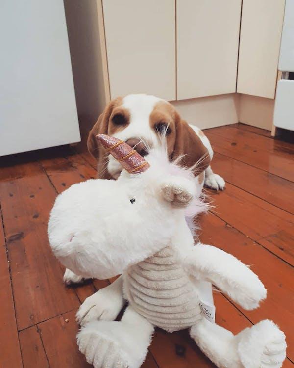 Dog Toy | Magical Hippocorn