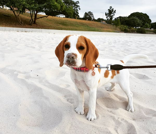 Dog Collar Pink Check | Bold