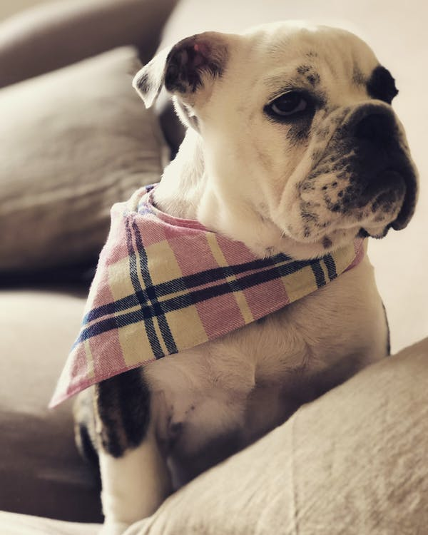 Dog Bandana Pink/Blue | Winter Warmers