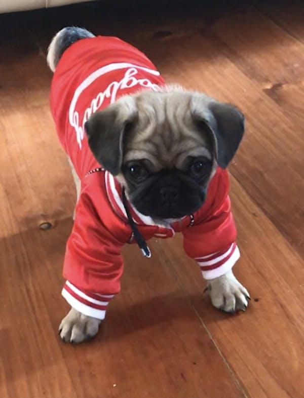Dog Jacket Red | Dog Baby