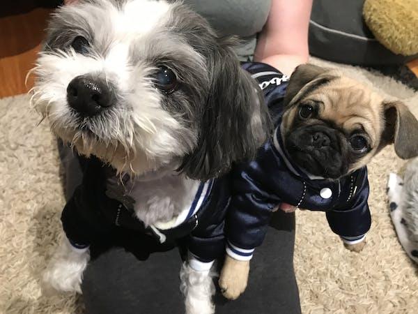 Dog Jacket Blue | Dog Baby