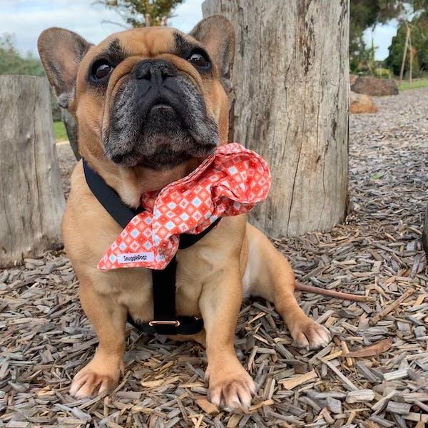 Dog Bandana Hipster (Orange/White) | Fierce