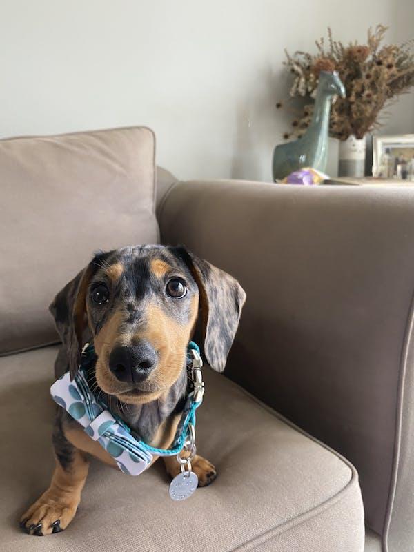 Dog Collar Bubbles  (Green/White) | Fierce