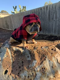 Bamboo Dog Hoodie | Red/Black Check