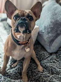 Dog Collar Jet Black | Glamorous