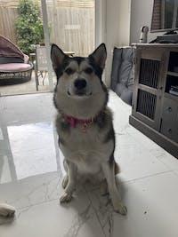 Dog Collar Velvet Pink | Timeless