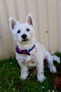 Dog Collar Dark Denim | Timeless