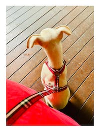 Dog Harness Red Check | Bold