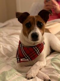 Dog Bandana Red Check | Bold