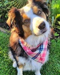 Dog Collar Green Leaf | Refined