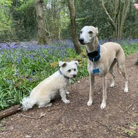THE BLUE Martingale Collar Collection
