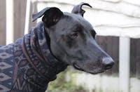 THE SAMMY Greyhound Jumper