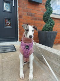 THE ECHO Herringbone Puppy Jumper
