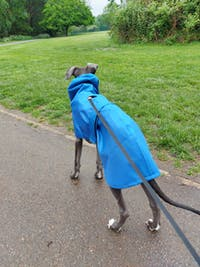 THE OLLIE Water-resistant Puppy Raincoat