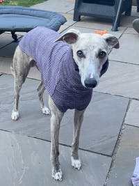 THE MADDY Dog Tooth Check Whippet Jumper