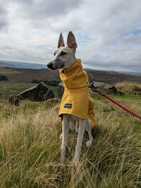 THE ROXY Lightweight Whippet Raincoat Collection