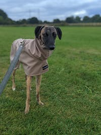 THE DOBBY Lightweight, Water Resistant, Whippet Raincoat