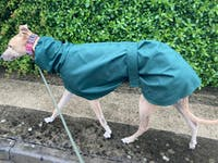 THE THEO Lightweight Greyhound Raincoat Collection