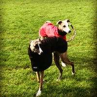 THE THEO Lightweight Whippet Raincoat Collection