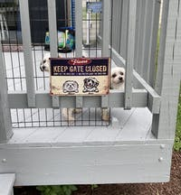 The Pawfect House
