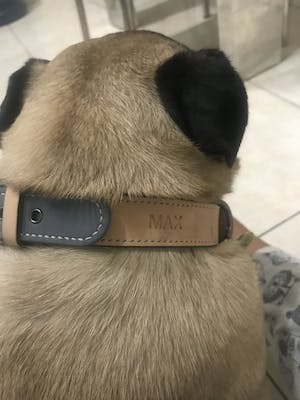 dog collar - color straps (basic colors)