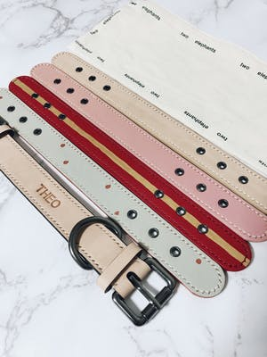 dog collar - color straps (pastel colors)
