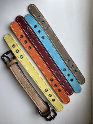 dog collar - color straps (everyday colors)