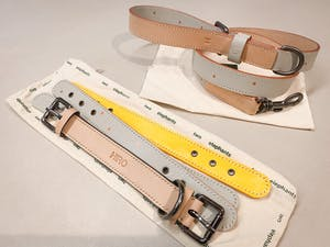 dog collar - color straps (neon colors)