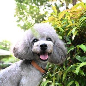 dog collar - color straps (basic colors)