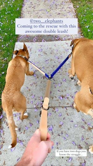 dog leash (dual)