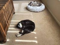 Cosy Cat Nest Bed