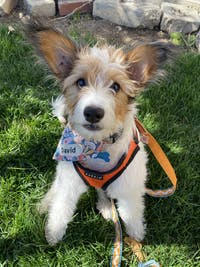 Blue Floral Snap On Dog Bandana