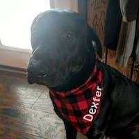 Red and Black Buffalo Check Over the Collar Dog Bandana