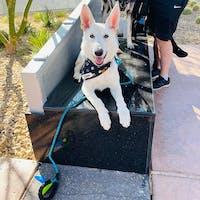Black Moon Snap On Dog Bandana